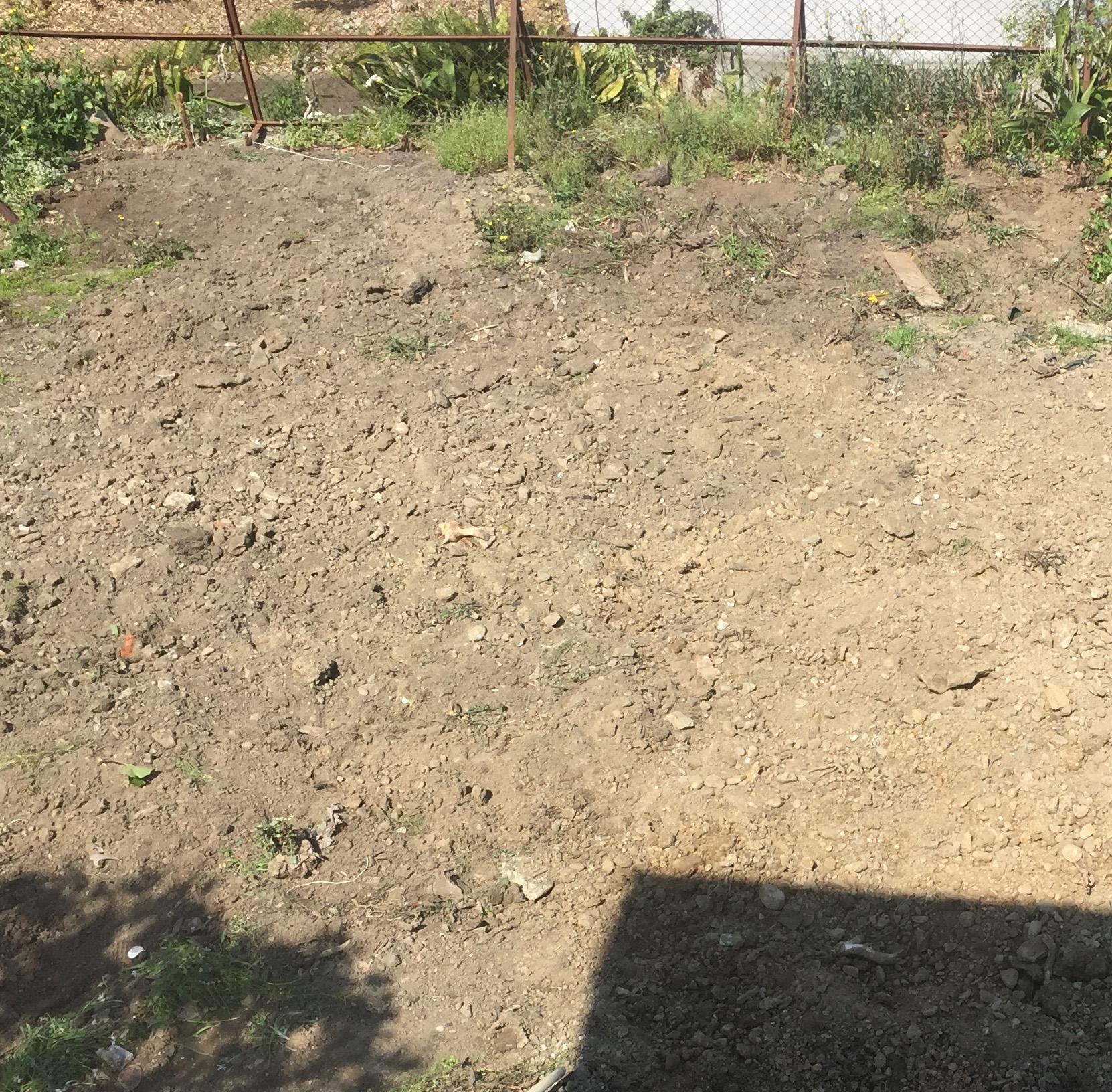 掘り返した庭