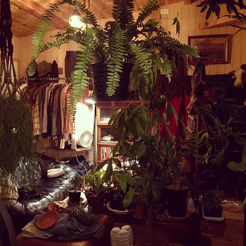 自室がジャングルになったり